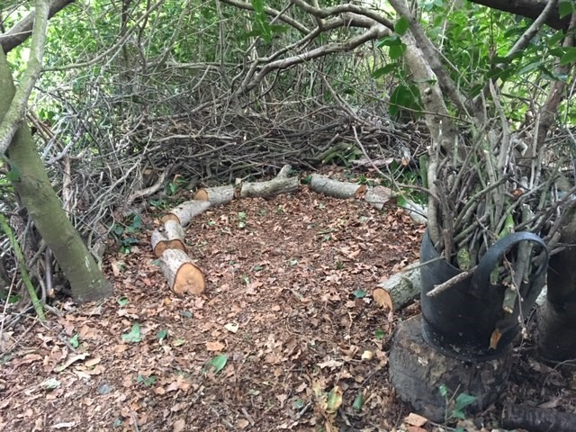 woodland-nest.jpg