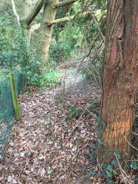 woodland-walk-2-.jpg