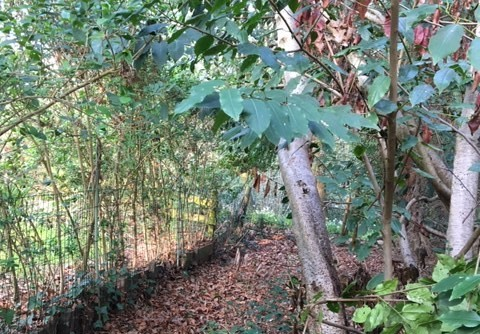 woodland-walk-landscape-2-.jpg
