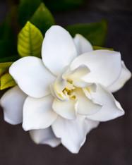 Royal Gardenia Incense - 1/2 lb