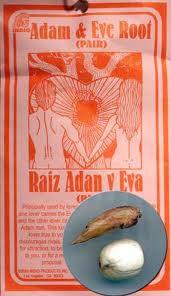 Adam & Eve Root