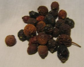 Rose Hips Whole 1 oz