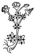Dandelion Root, Cut 1 oz