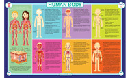 Human Body Placemat