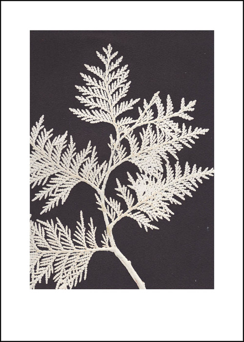 "Contemporary Scandinavian Print - Thuja White - Black & White - 19.75"" x 27.5"""