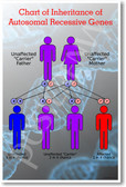 Inheritance of Recessive Genes - NEW Science Poster