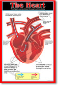 The Heart - Biology Science Classroom Poster
