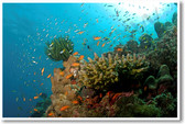 Coral Reef an Havelock in Andaman - NEW Animal Wildlife Poster