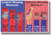 Sleeping Mammals - NEW Animal Wildlife Poster