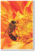 Honey Bee Gathering Nectar - NEW Animal Wildlife Poster