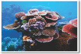 PosterEnvy - Coral on Great Barrier Reef - Animal Poster