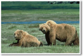 PosterEnvy - Grizzly Bears - Animal Wildlife Poster