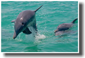 PosterEnvy - Dolphins at Play - Animal Poster