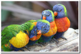 PosterEnvy - Wildlife Poster - Pretty Birds 3 - Animal Poster