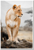 Lioness Looking Nature Wildlife Animal Poster lion (an165)