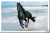 PosterEnvy - Stallion Running Along the Beach - Animal Poster