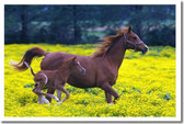 PosterEnvy - Mare & Foal in a Field of Buttercups - Animal Poster