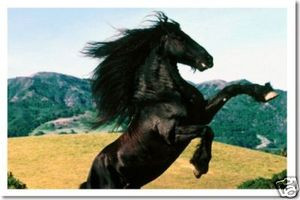 PosterEnvy - Black Stallion Horse - Animal Poster