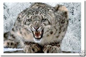 Snow Leopard - Animal Poster