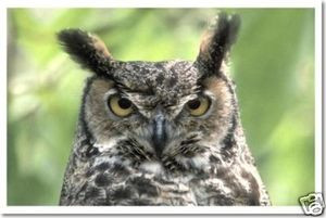 Wise Owl - Animal Poster