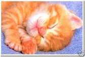 Kitty Sleepy Bye - Animal Poster