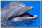 PosterEnvy - Happy Dolphin - Porpoise - Animal Poster