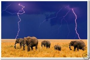 PosterEnvy - African Elephants & Lightning - Animal Poster