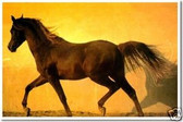 PosterEnvy - Brown Horse on a Yellow Wall - Animal Poster