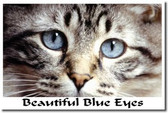 PosterEnvy - Beautiful Blue Eyes Kitten - Animal Poster