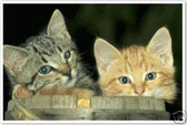 PosterEnvy - Two Kittens in a Barrel - Animal Poster