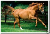 PosterEnvy - Brown Horse Galloping - Equestrian - Animal Poster