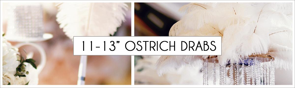 11-to-13-ostrich-header-picture-edited-1.jpg