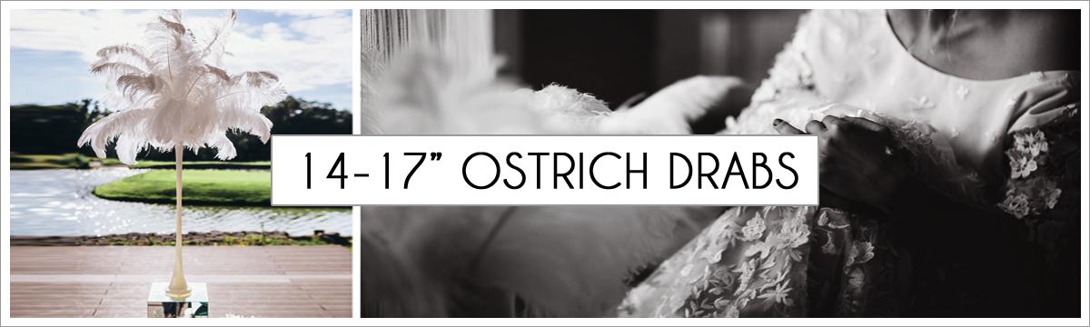 14-to-17-ostrich-header-picture-edited-1.jpg
