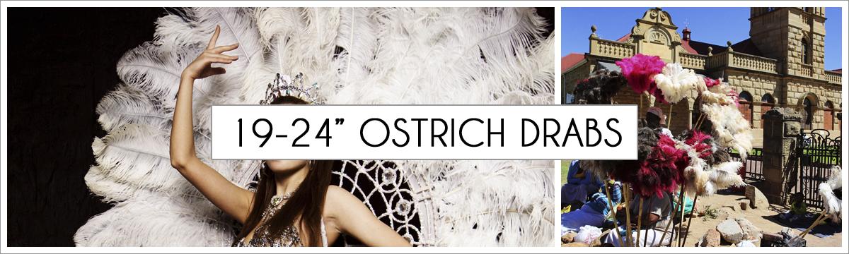 19-to-24-ostrich-header-picture-edited-1.jpg