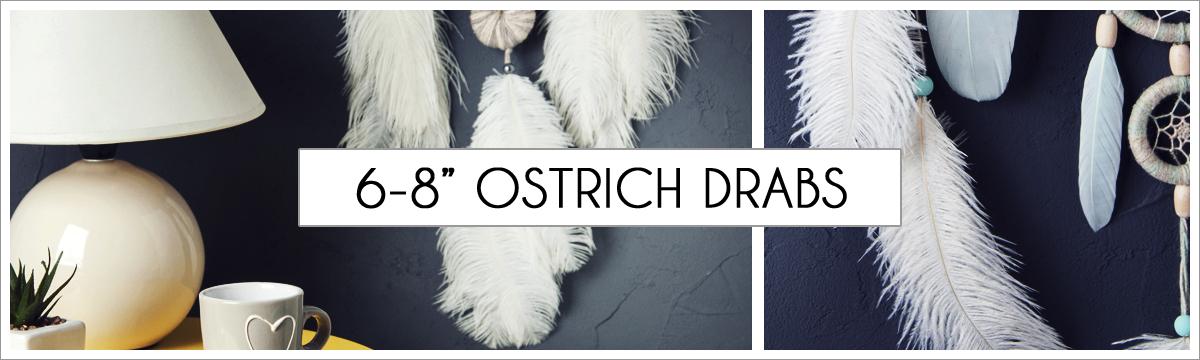 6-to-8-ostrich-header-picture-edited-1.jpg