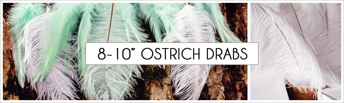 8-to-10-ostrich-header-picture-edited-1.jpg
