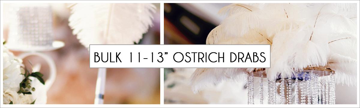 bulk-11-to-13-ostrich-header-picture-edited-1.jpg