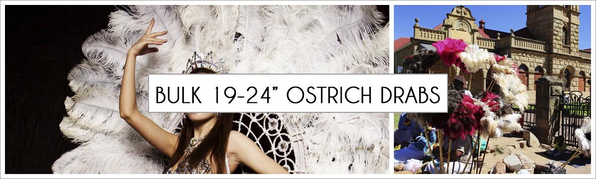 bulk-19-to-24-ostrich-header-picture-edited-1.jpg