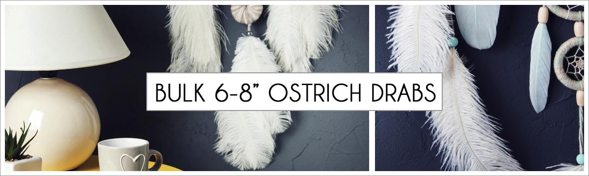 bulk-6-to-8-ostrich-header-picture-edited-1.jpg