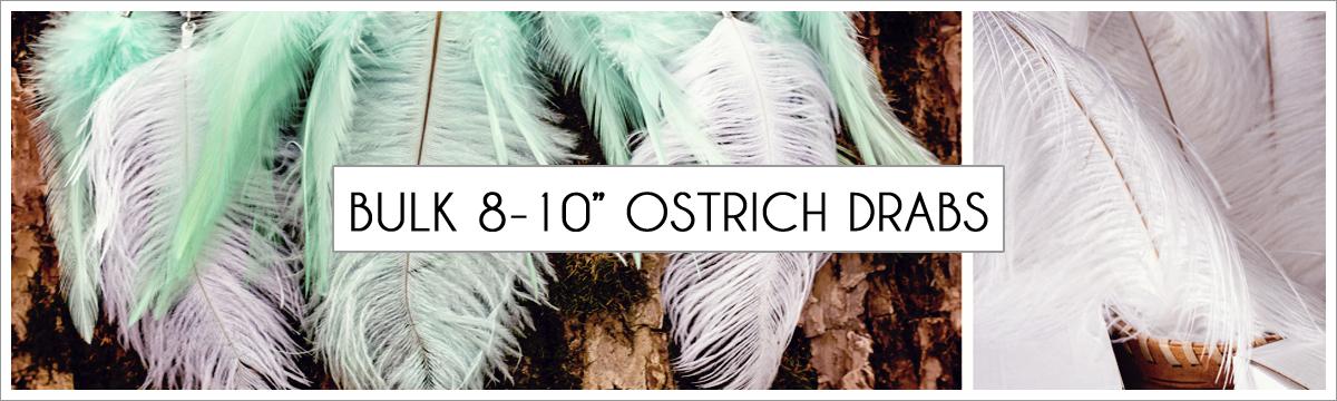 bulk-8-to-10-ostrich-header-picture-edited-1.jpg