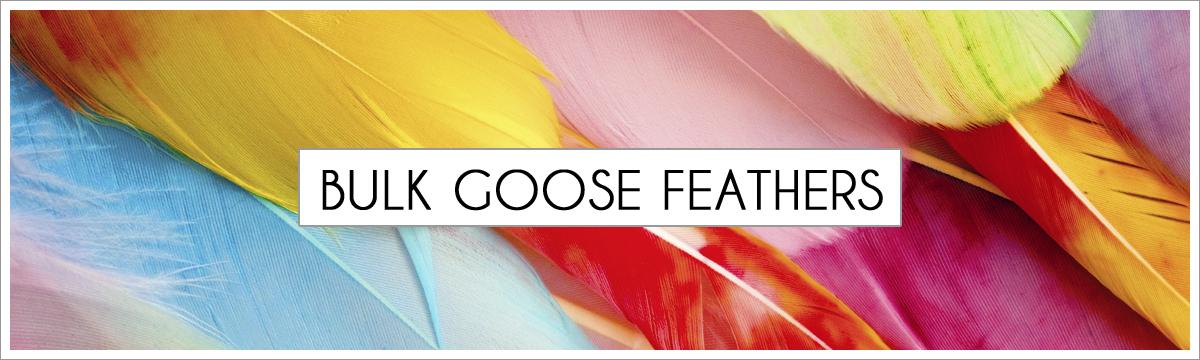 bulk-goose-picture-header-edited-1.jpg
