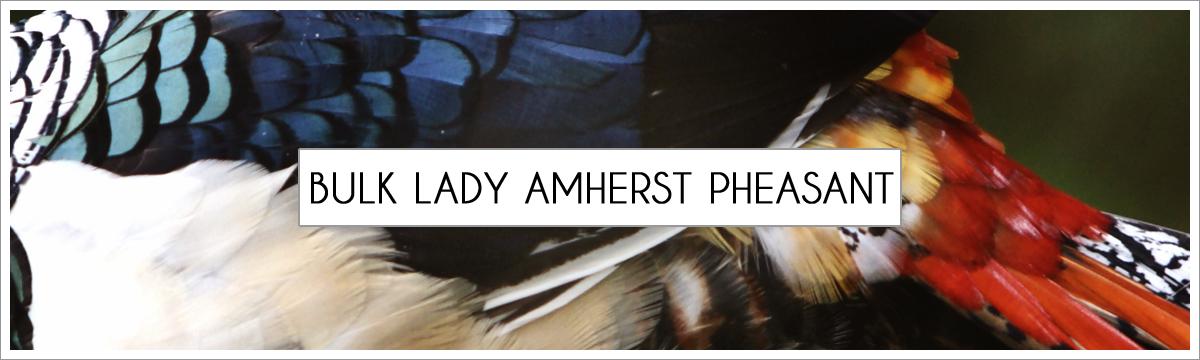 bulk-lady-amherst-header-picture-edited-1.jpg