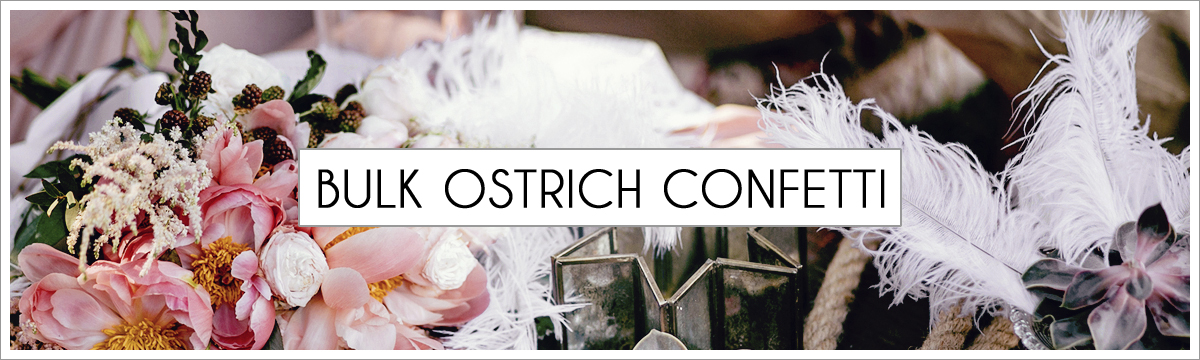 bulk-ostrich-confetti-header-picture-edited-1.jpg
