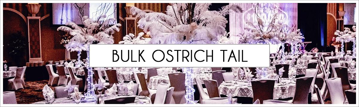 bulk-ostrich-tail-header-picture-edited-1.jpg