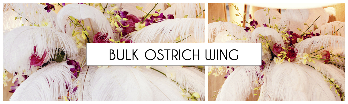 bulk-ostrich-wing-plumes-header-picture-edited-1.jpg