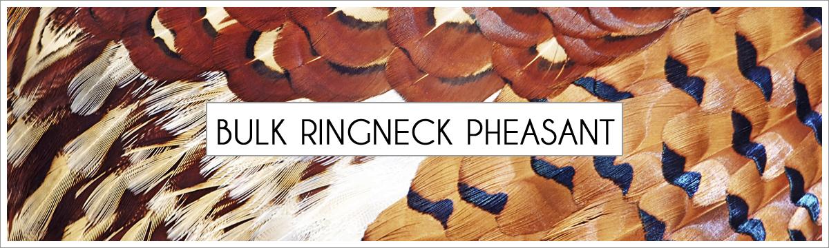 bulk-ringneck-pheasant-header-picture-edited-1.jpg