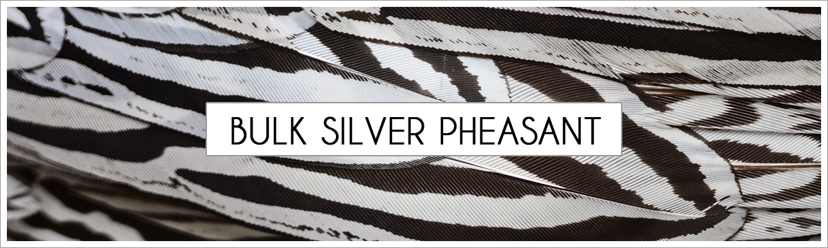 bulk-silver-pheasant-header-picture-edited-1.jpg