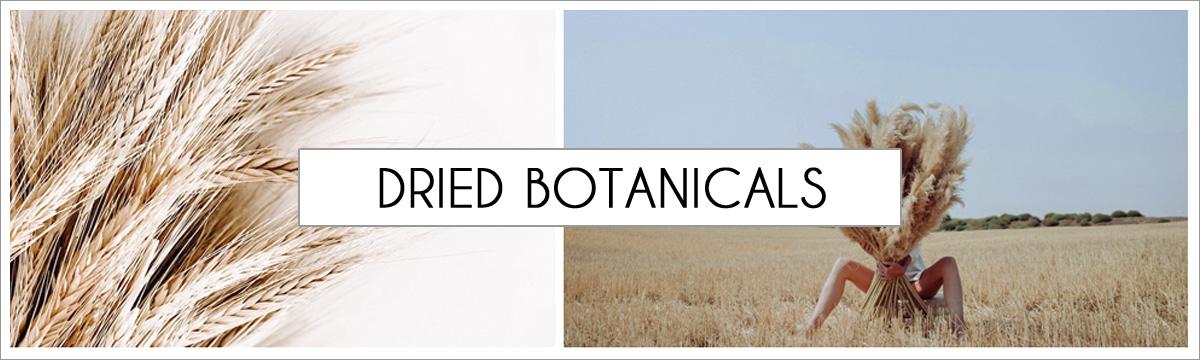 dried-botanical-header-picture-edited-1.jpg
