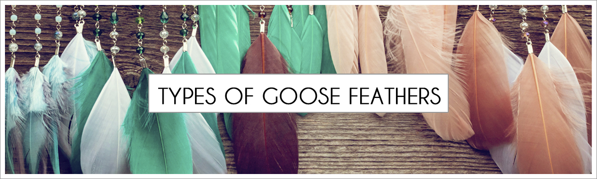 goose-main-picture-header2.jpg