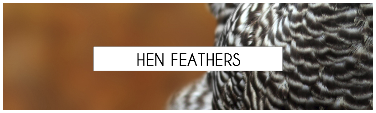 hen-feathers-header-picture-edited-1.jpg